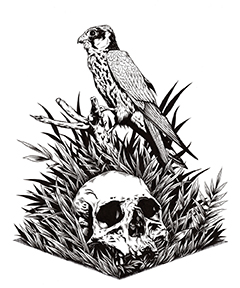 hawk-and-skull-copy240.jpg